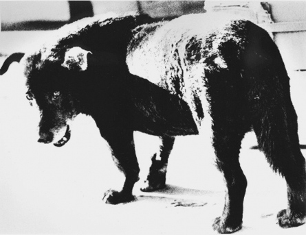 Daido Moriyama (1971) Stray dog